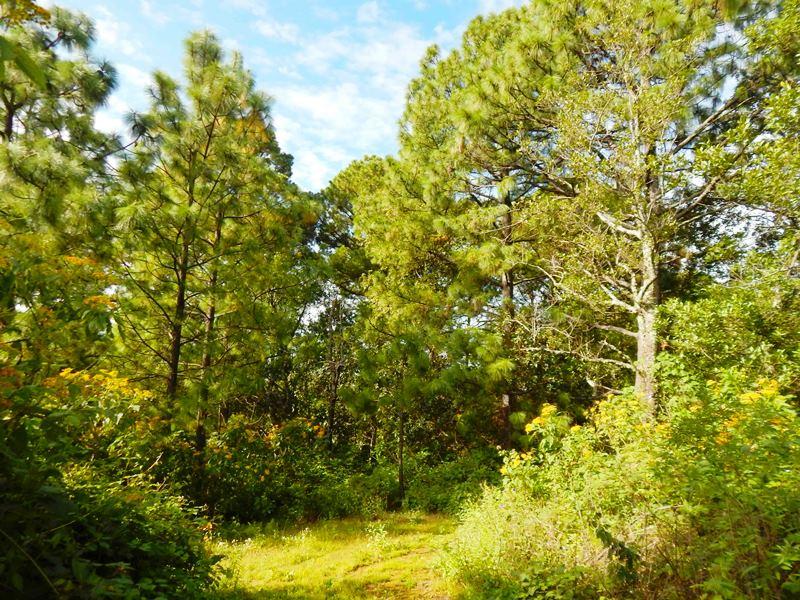 Reserva-de-la-Chara-Pinta-a-un-paso-del-Paraiso-2013-zona-tropico