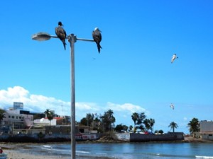 Aves eb el Malecón de Mazatlán