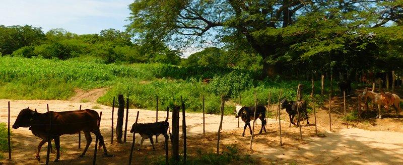 pueblos-rurales-la-noria