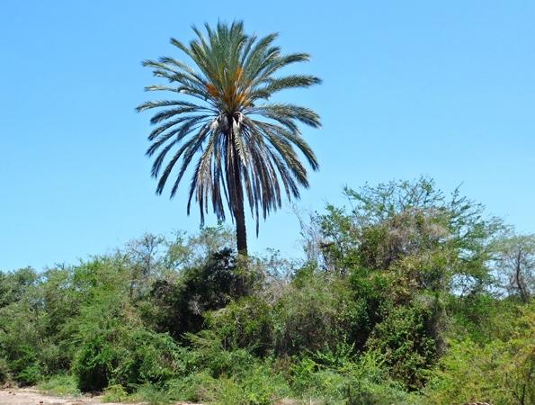 Invitación a la Zona Trópico del Sur de Sinaloa 2016