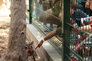Bambina y sus Crías en Acuario Mazatlán 2017 (14)