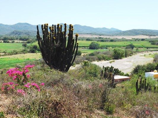 La Sindicatura de El Quelite en Mazatlán atrae Inversiones