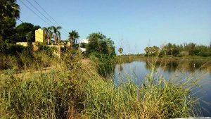 Laguna del Camarón Mazatlán Engullida por Avenida Bahía 2017