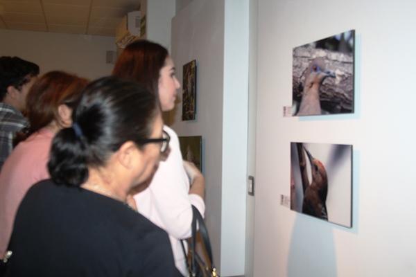 Exposición Fotográfico Cielo Mar Y Tierra Mazatlán 2018